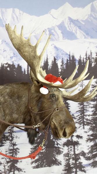 Alaskan Moose Photo Booth Rental