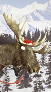 Hank The Moose