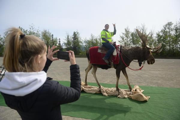 Alaska Moose Selfie Station